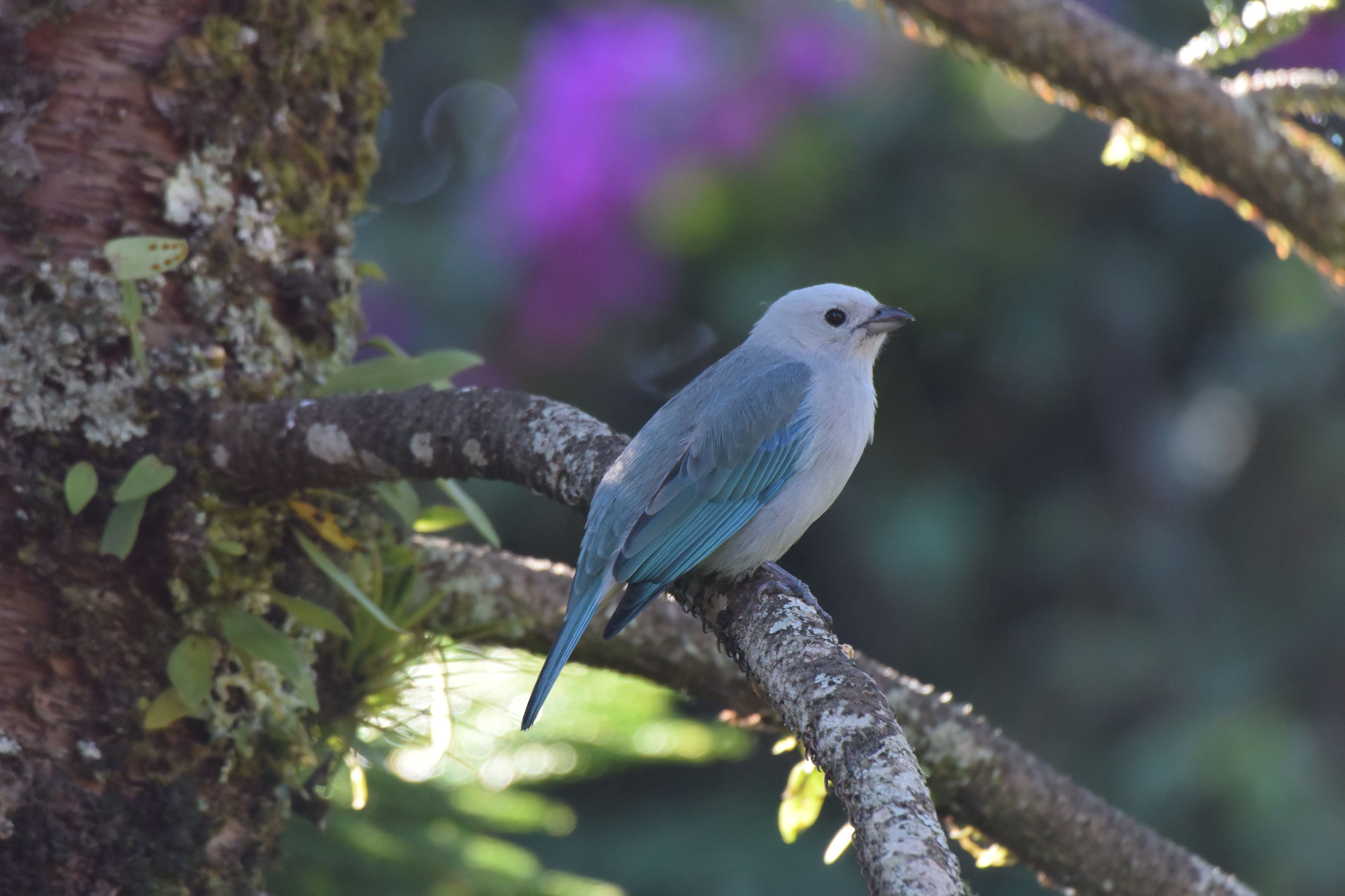 Pennsylvania eBird Birds Pinterest