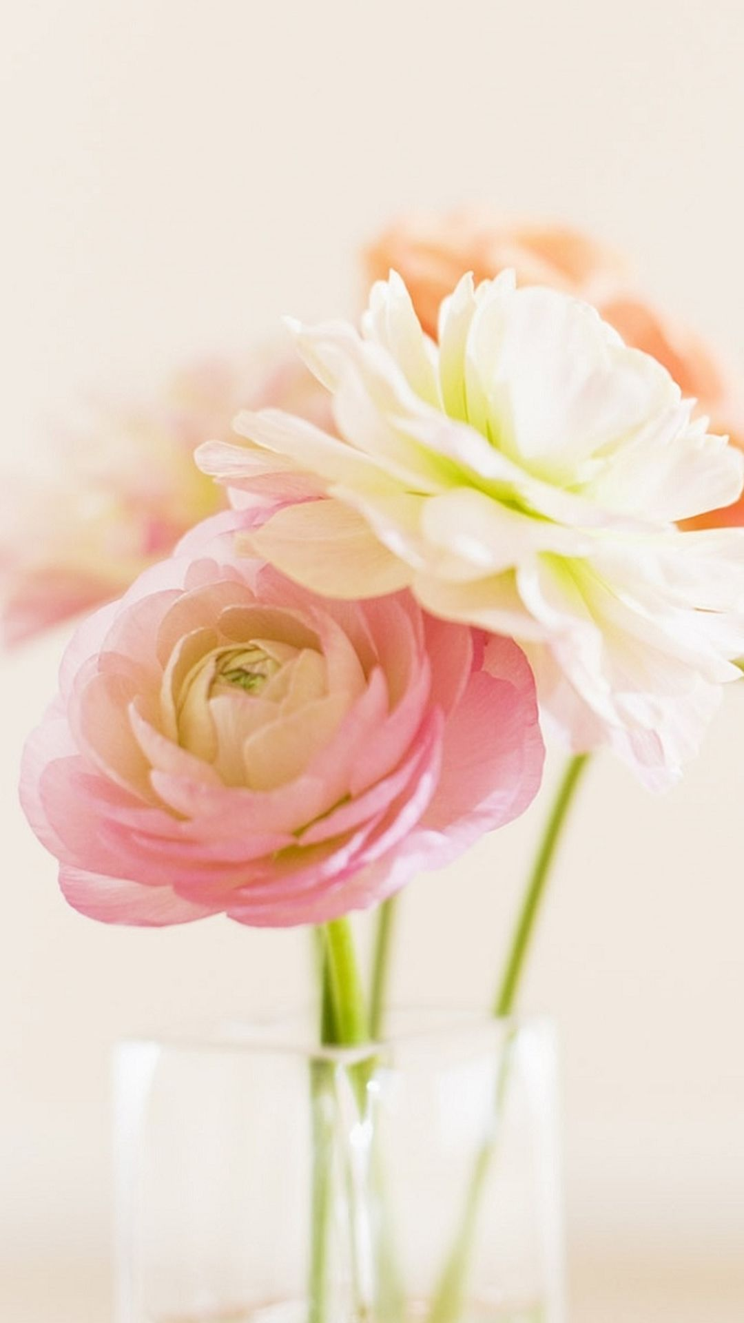 Elegant beautiful bloom glass vase iphone 6 wallpaper for my elegant beautiful bloom glass vase iphone 6 wallpaper reviewsmspy