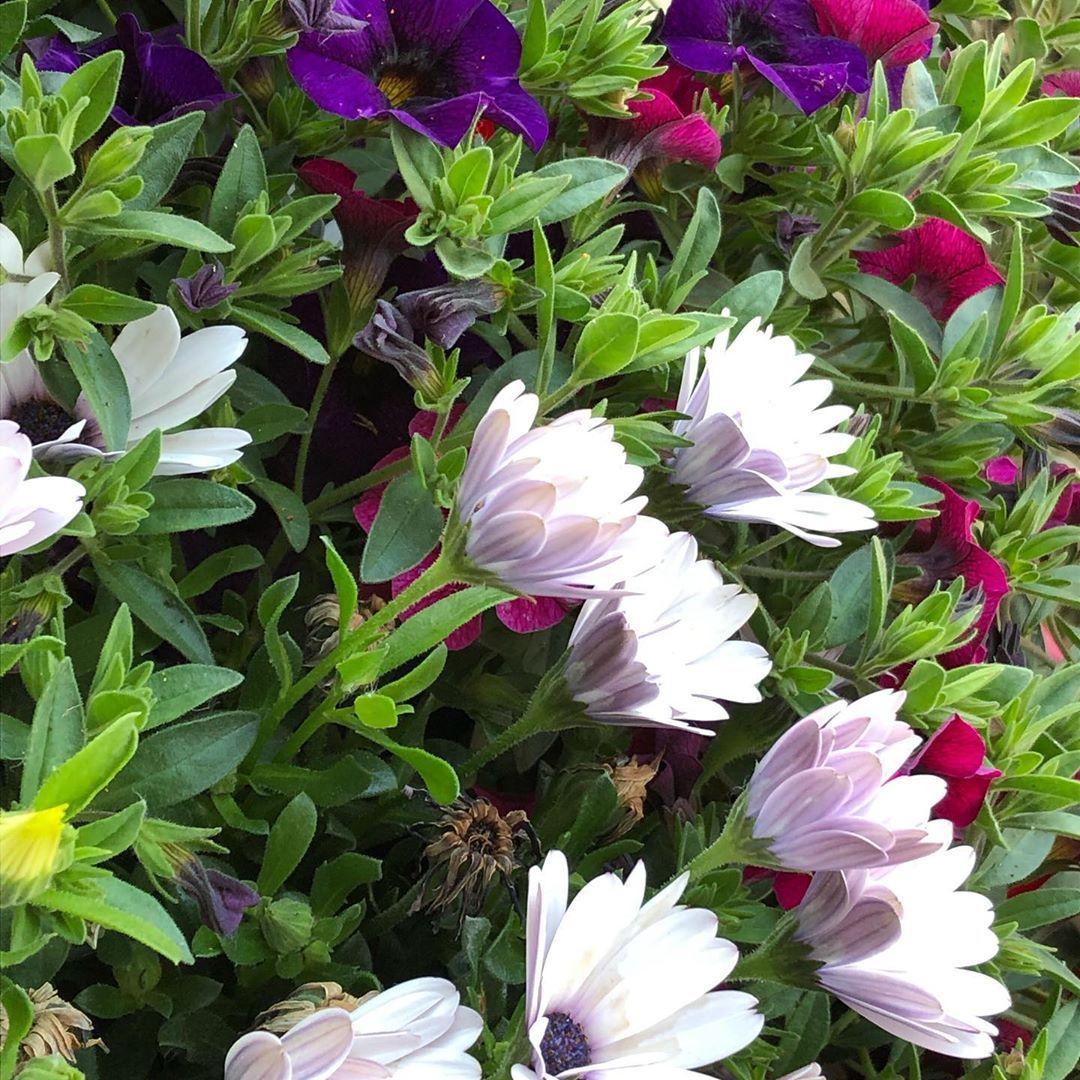 Blumen Blumenstrauss Blumenmadchen Blumenmeer Balkon Balkonblumen Blumenuberblumen Wachsen Ichliebemeineblum Unsecured Credit Cards Plants Fair Credit