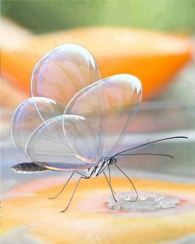 Translucent butterfly.