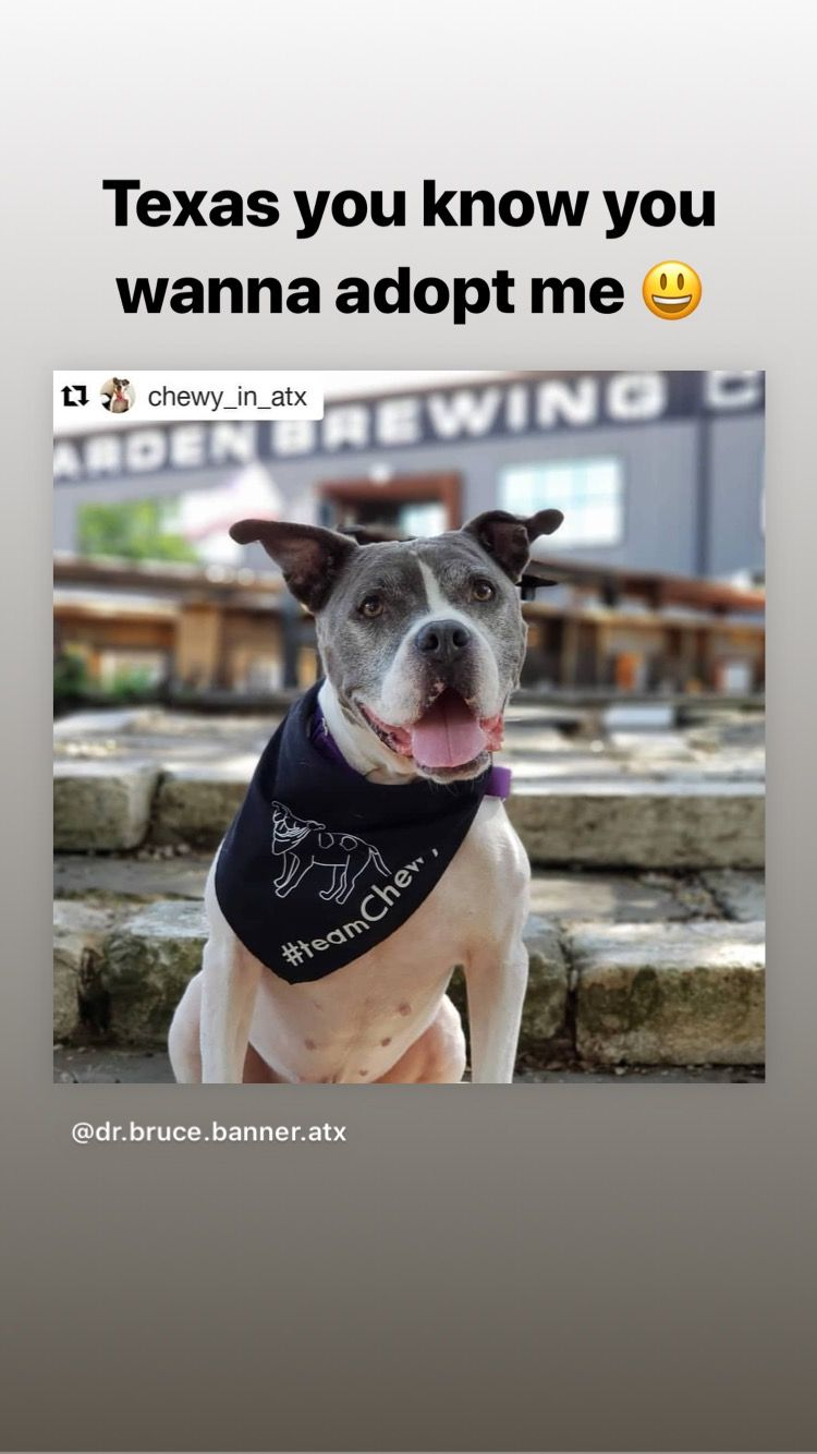 Chewy Needs A Furever Home His With Austin Pets Alive Austin