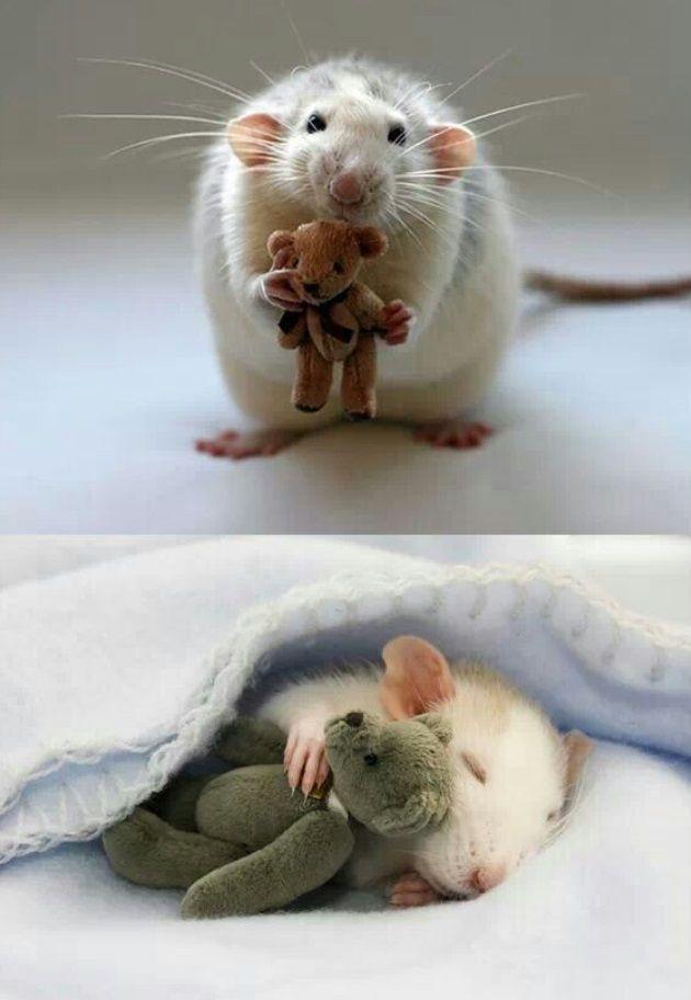 הפטריה | מקסים: עכברים אוהבים דובונים בסדרת תמונות נהדרת