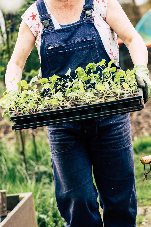 Hochbeet Auffullen Kompost Muttererde Oder Gekaufte Hochbeet Erde Hochbeet Kompost Pflanzen