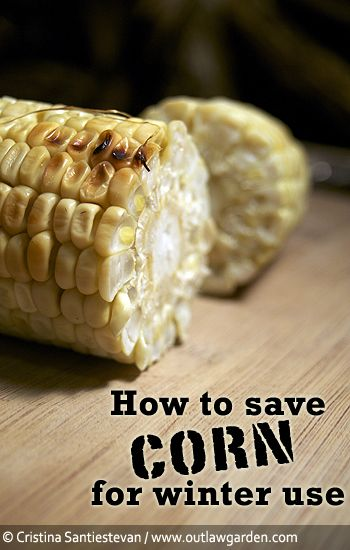 How to save summer corn for winter use.