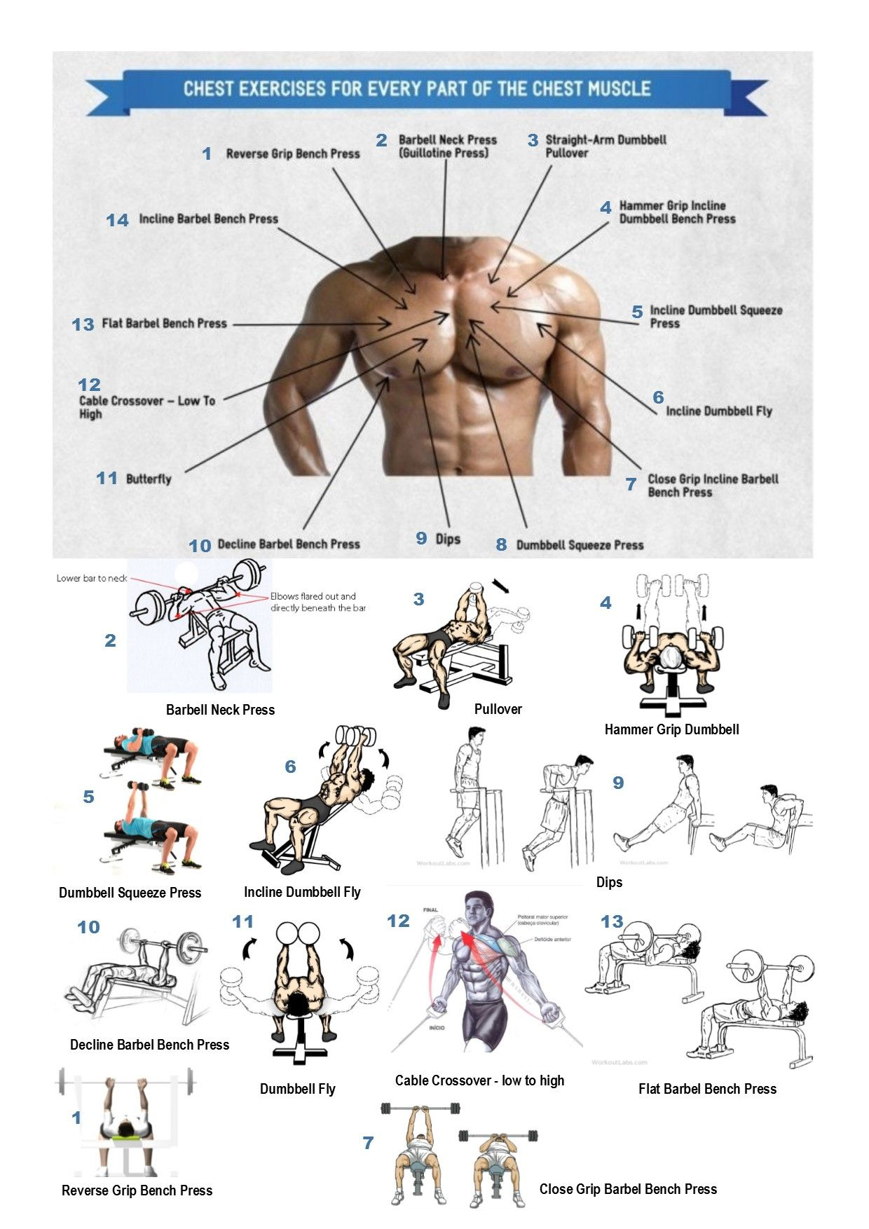 Los mejores ejercicios para un pectoral perfecto guia for Ejercicios de gimnasia