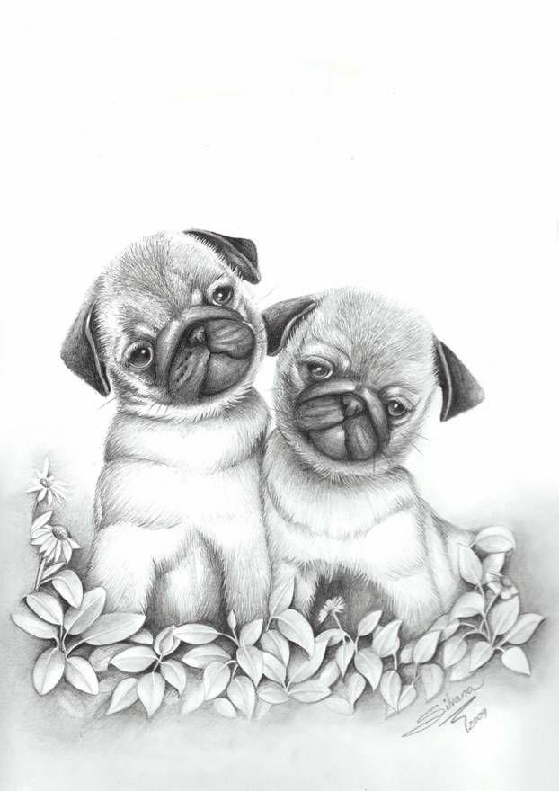 Dibujo a lapiz de animales tiernos  Imagui  Cachorros graciosos