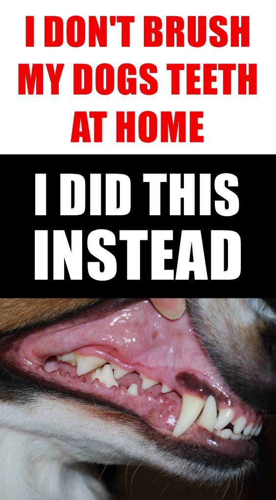 Did You Know That 80% Of Dogs Have Dental Disease By Age 3