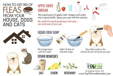 How To Get Rid Of Fleas From Your House Dogs And Cats Dog Flea Remedies Fleas On Kittens Cat Fleas