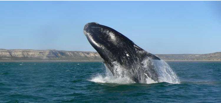 Avistaje de ballenas Boston