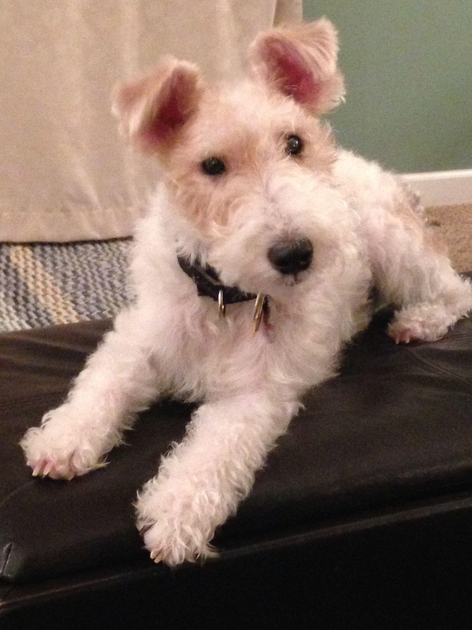 Pin von Linda Slaughter auf Puppy love! | Pinterest