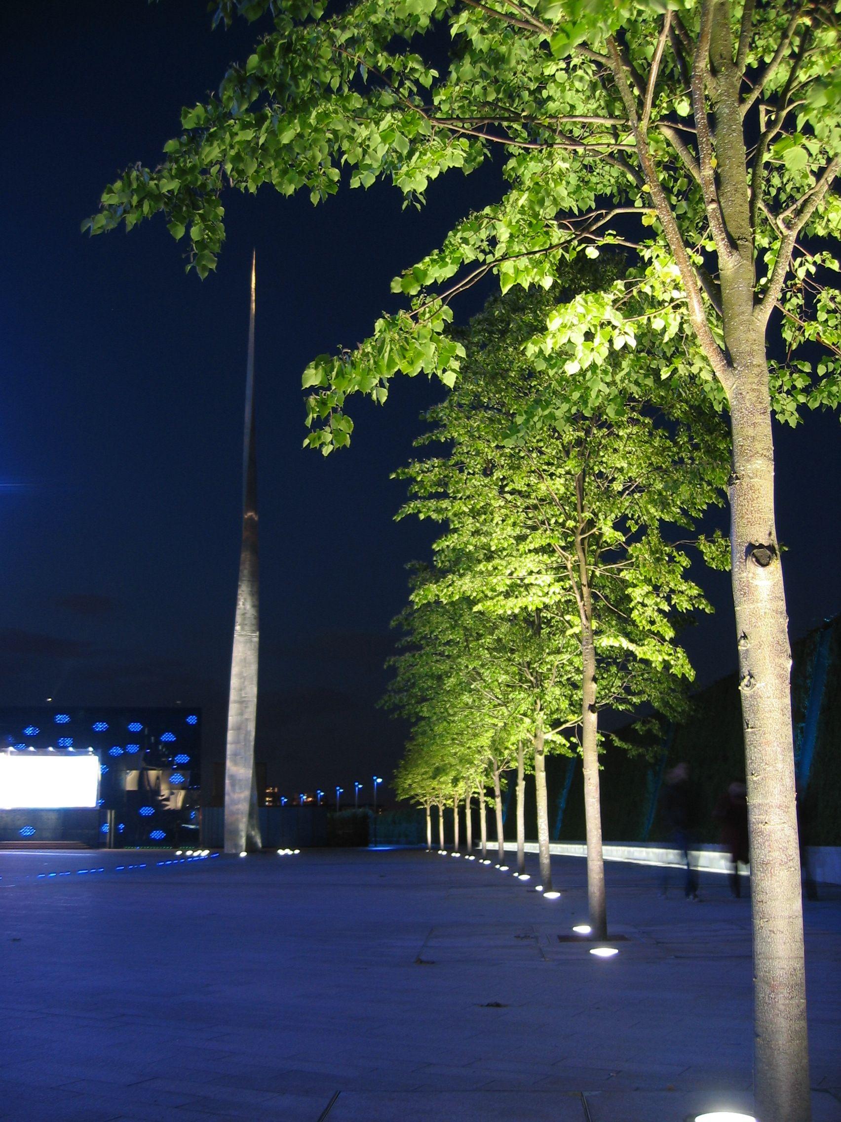 Bega exterior lighting cherry picks pinterest for Landscape tree lighting