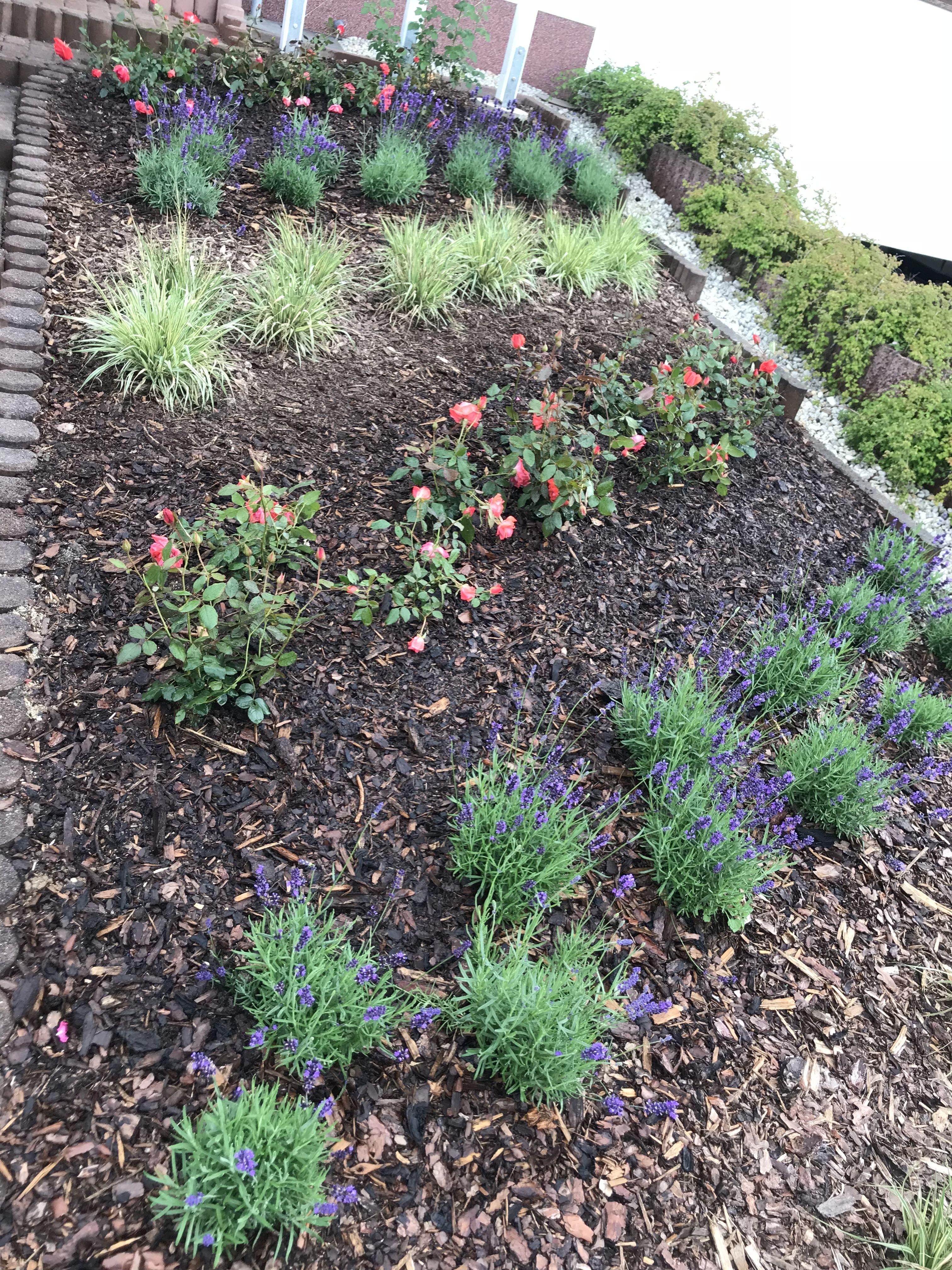 Beetbepflanzung Vorgarten
