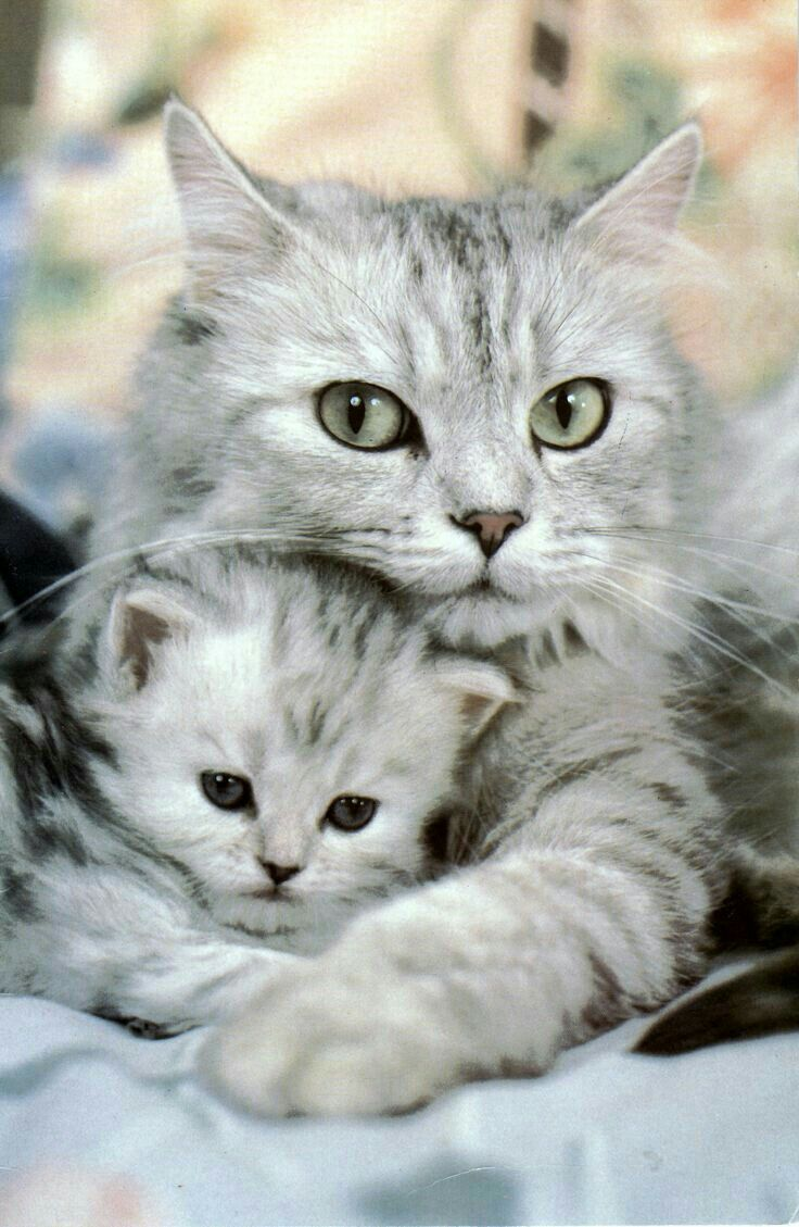 Que Lindos Kittens Cutest Cute Animals Cute Cats And Kittens