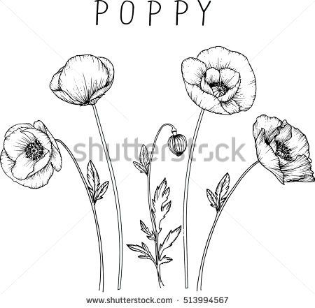 Drawing Flowers Poppy Flower Clip Art Or Illustration Amapola