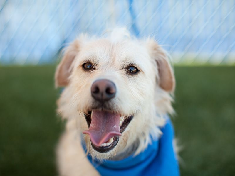 Pet of the Week spcaLA It would be a smart choice to