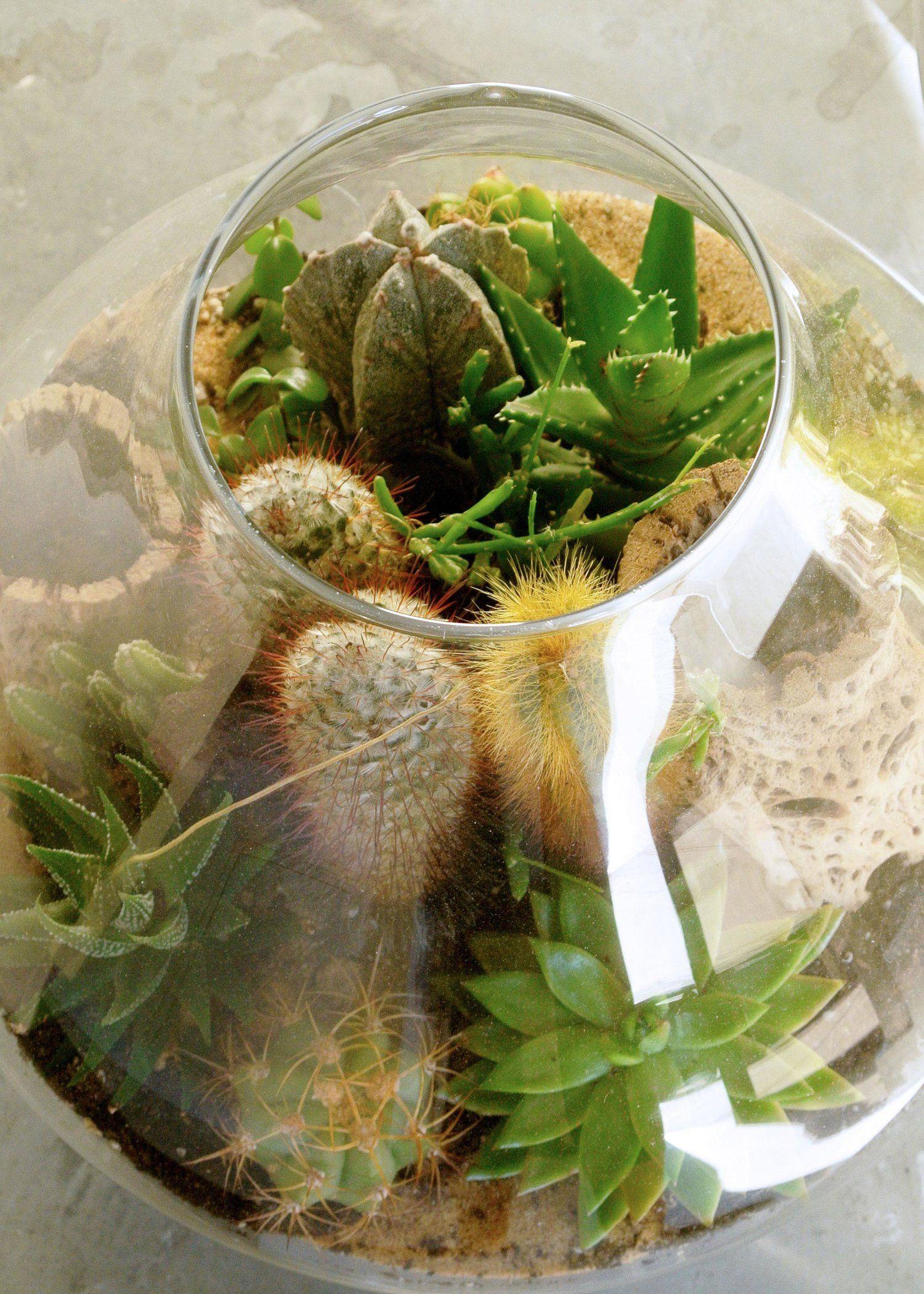 Photo of One-on-One Succulent Terrarium Building Workshop Megan George — The Zen Succulent   Durham's Neighborhood Plant & Gift Shop