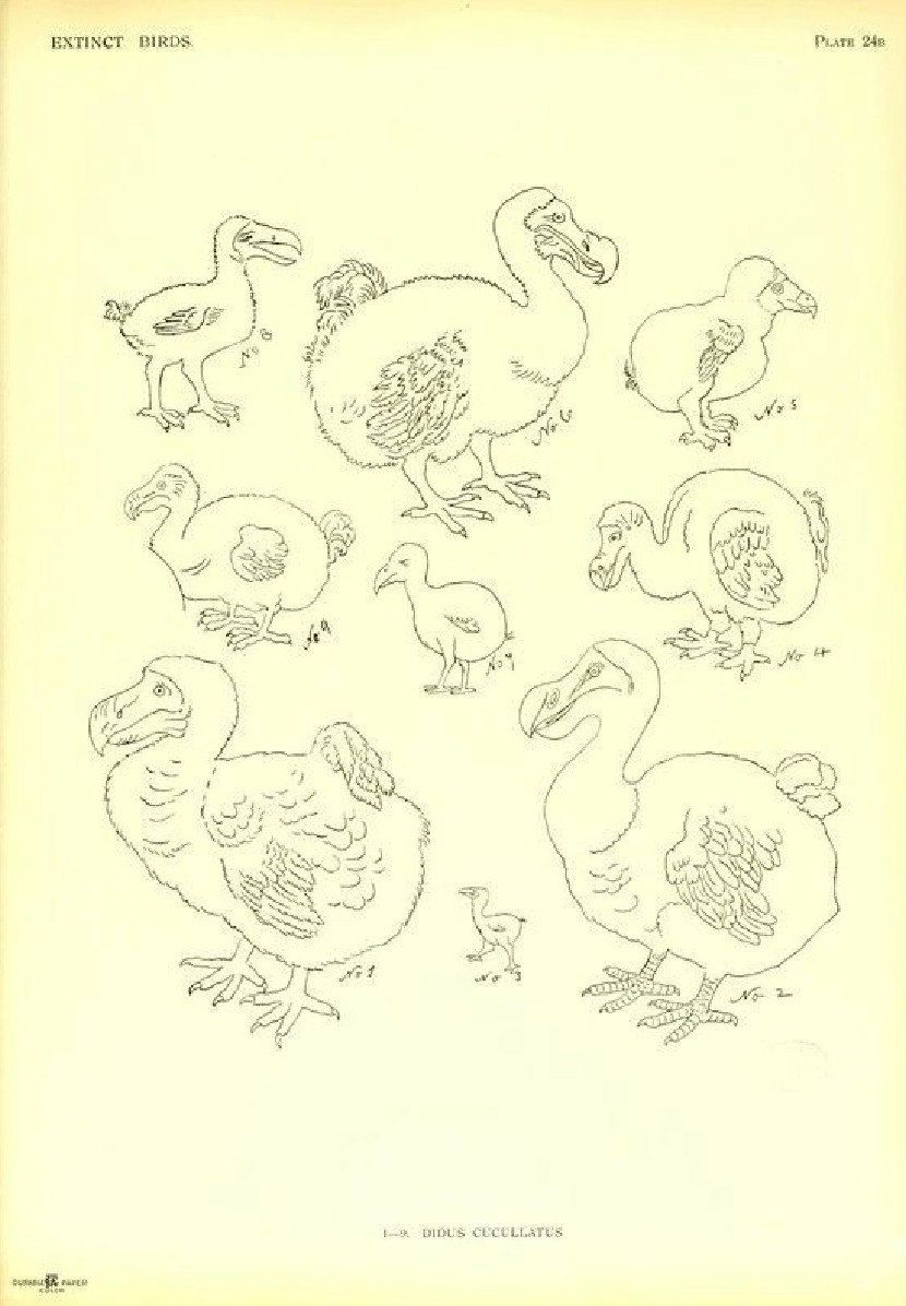 Check out this cool vintage extinct ducks print at my etsy shop OldEarthDigitalPrint. If you like please share! Available for  purchase for only 1.99 at https://www.etsy.com/listing/210745746/vintage-extinct-bird-print-digital?ref=listings_manager_grid