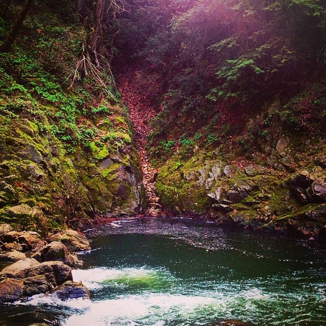 Garden Of Eden And Other Fun Things To Do In Santa Cruz Bay Area
