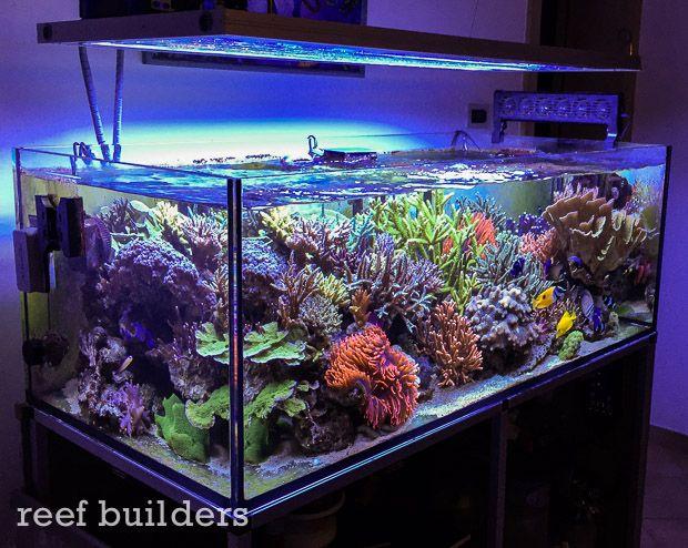 marta spano 39 s 120 gallon 450 l reef aquarium. Black Bedroom Furniture Sets. Home Design Ideas