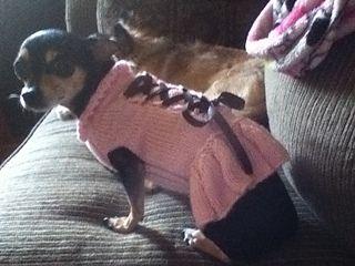 free pattern dog corset cress  sarah wesemann  dog