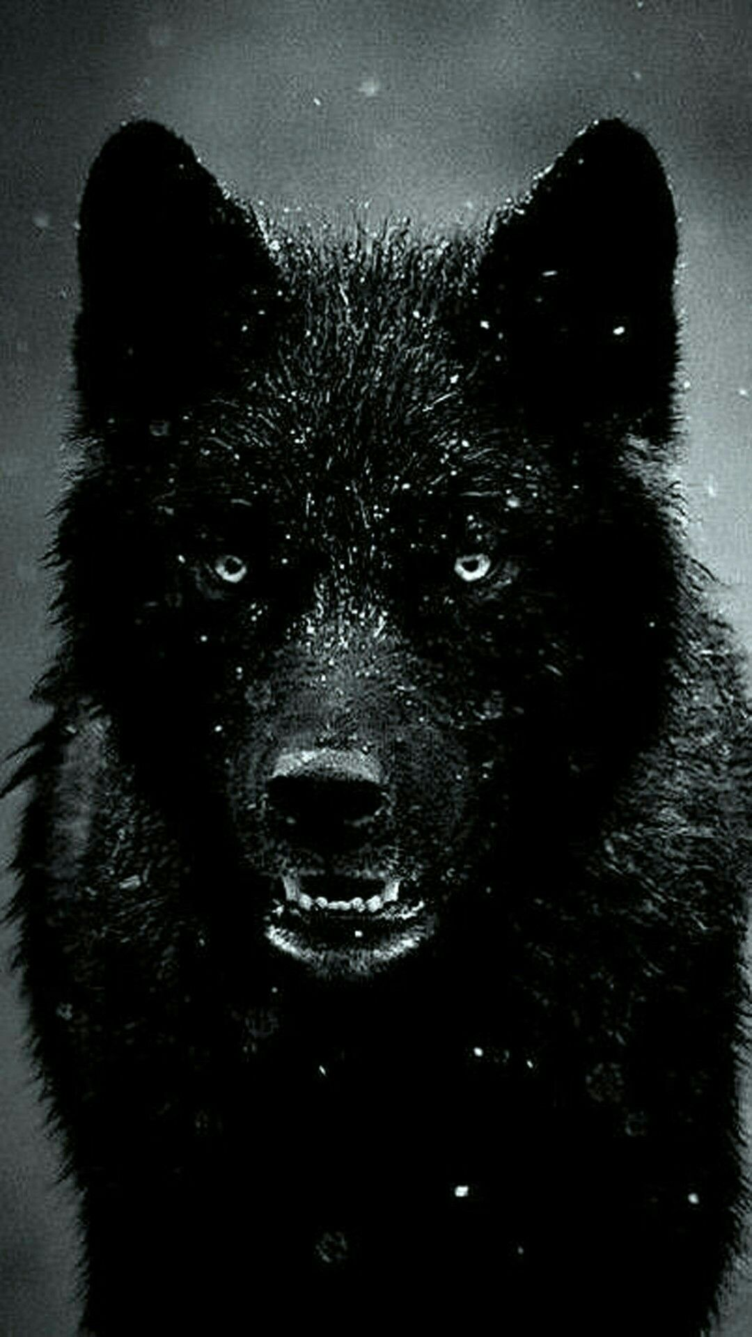 Pin by James Miles on Dogs Wolf wallpaper, Black wolf