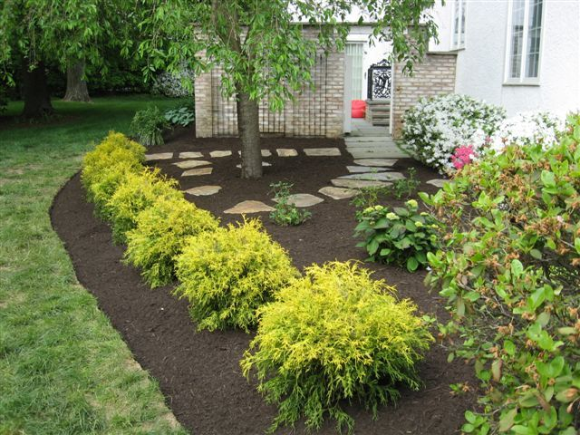 Landscaping With Golden Mop Cypress Google Search Small Front