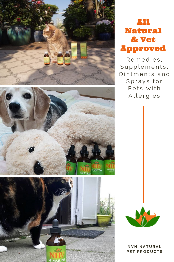 Natural Allergy Kit With Histamine Support Food Allergy Support Ear Drops Eye Drops Skin Spray For Itchiness Balm Fo In 2020 Natural Pet Natural Dog Remedies Pets