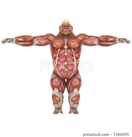 gorilla, gorillas, muscles 7290055 | el gorila | Pinterest ...