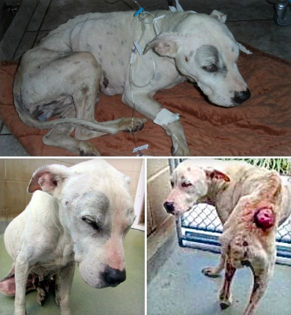 Pin On Animals In Need