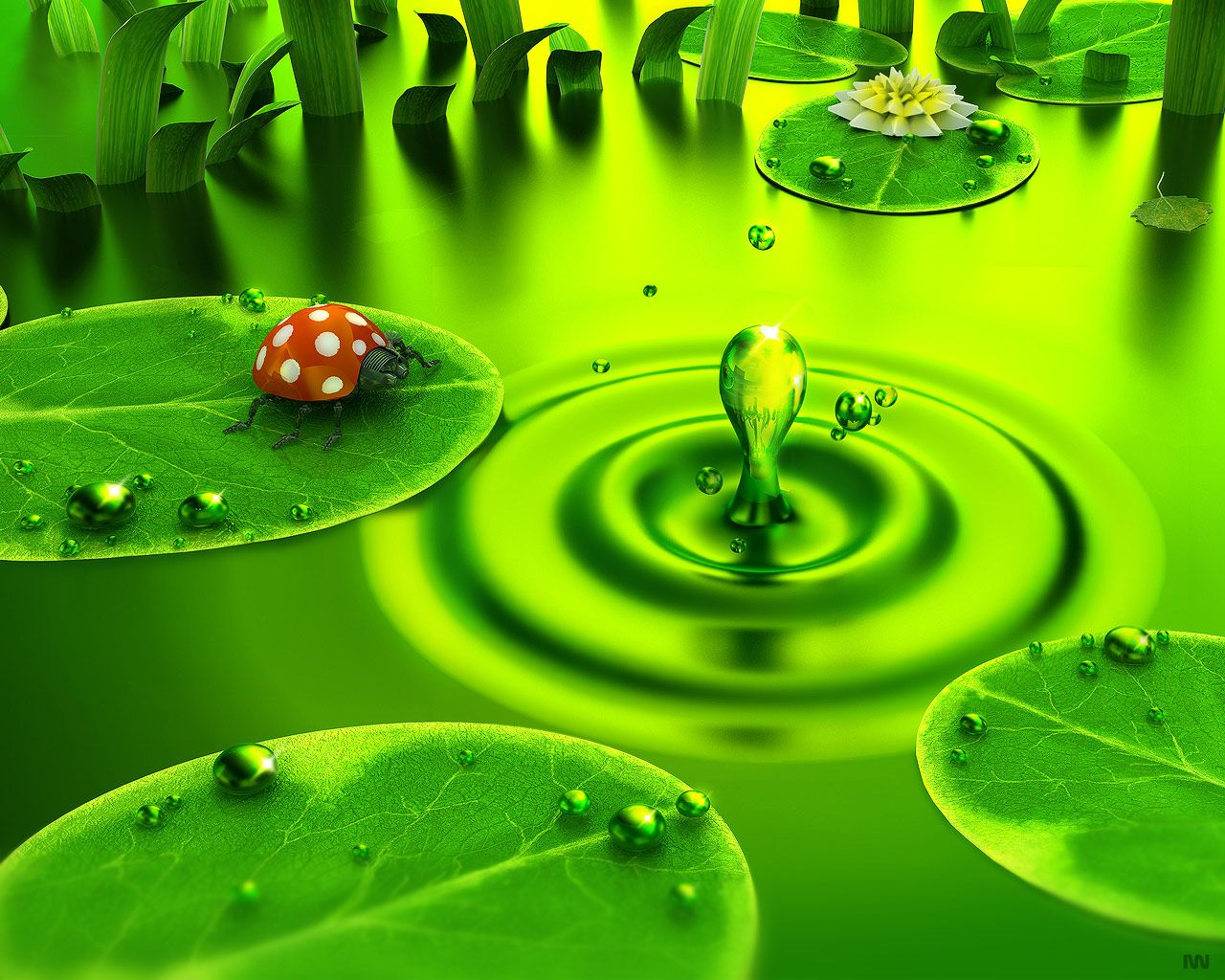 Water Drop Full HD Wallpaper and Background x ID