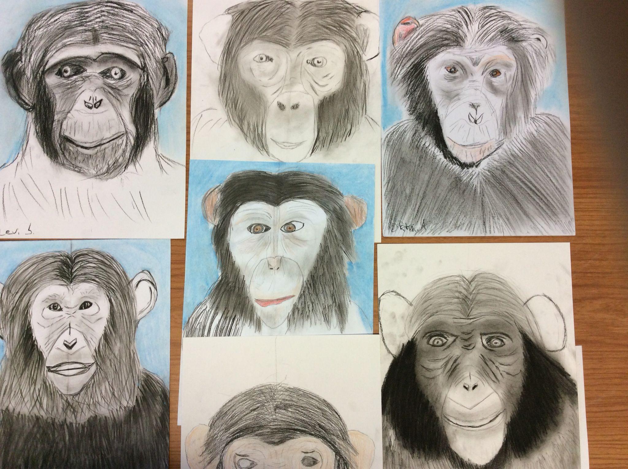 Chimpansee Een Waaerneming