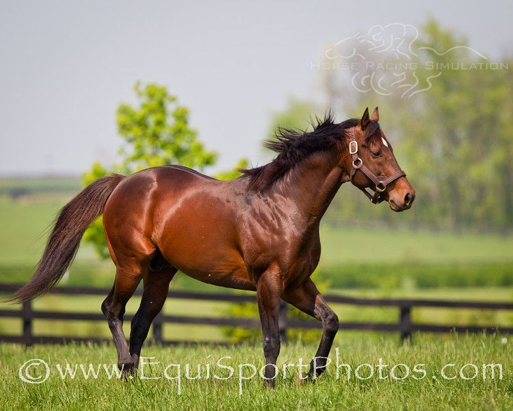 Ghostzapper Inducted into the National Museum of Racing