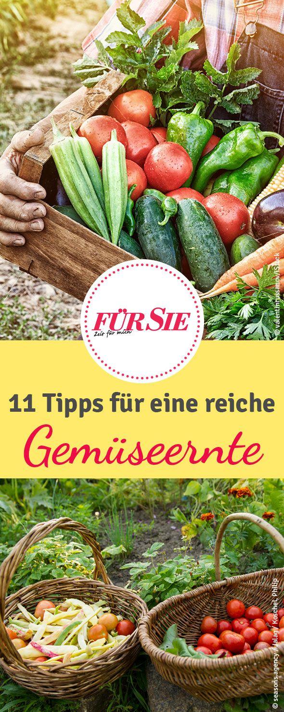 Wir Verraten Tipps Fur Eine Ertragreiche Ernte Von Gemuse Und Obst Im Eigenen Garten So Werdet Selbstversorger Garten Gemuseanbau In Kubeln Diy Krautergarten