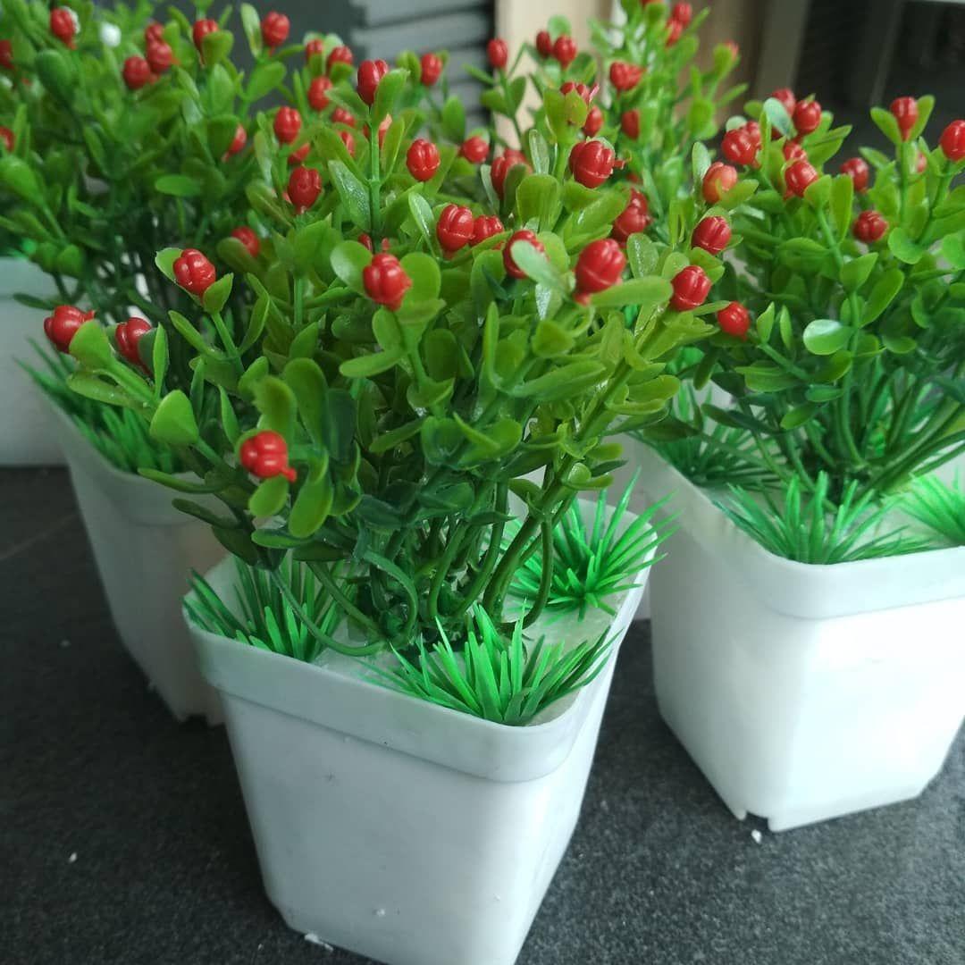 Bunga Hias Dalam Pot
