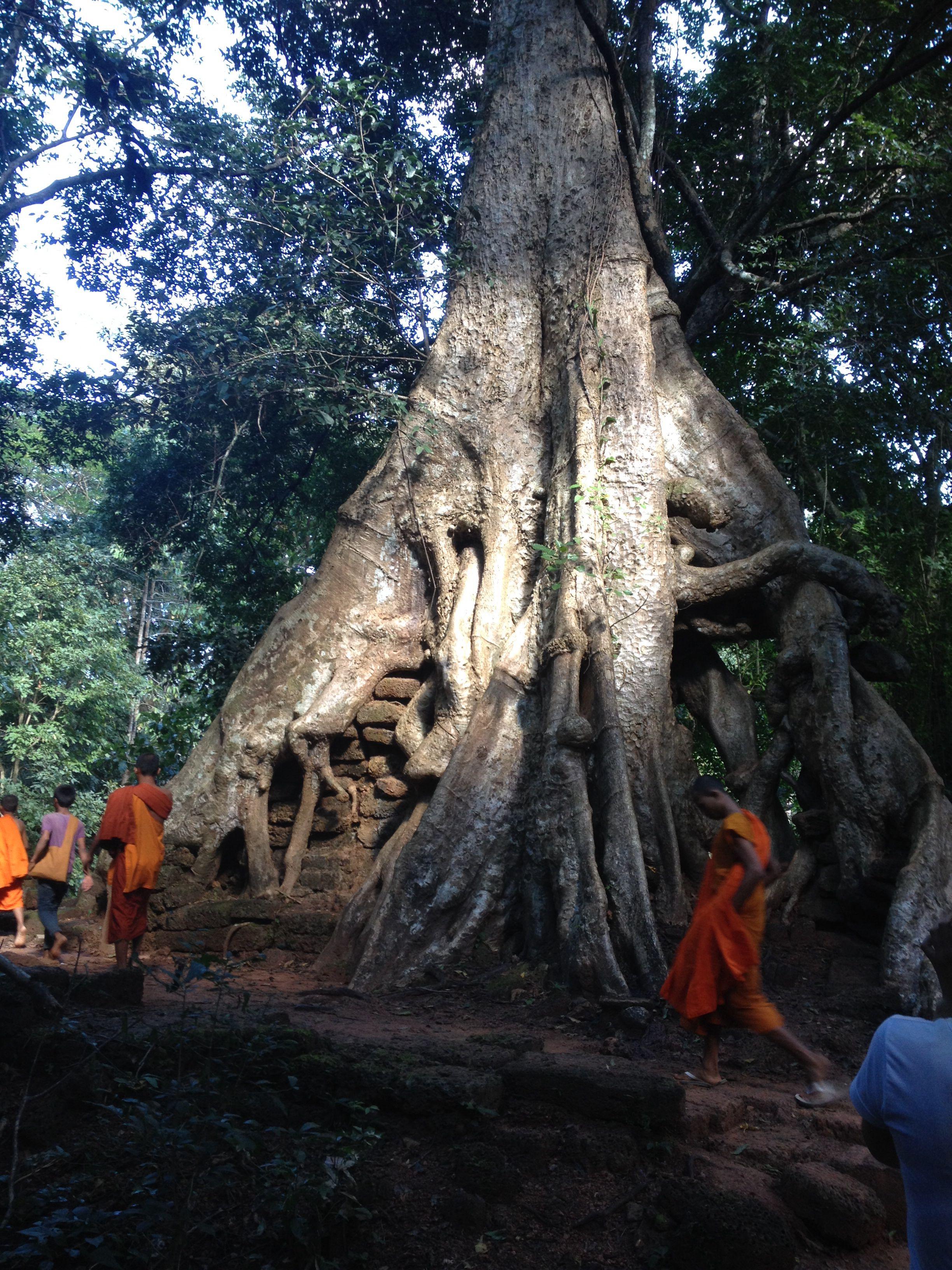 Angkor watt cambodia 2013
