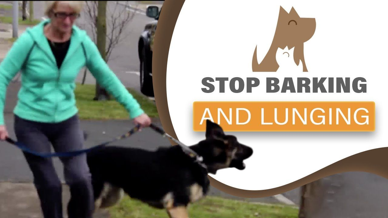 Fear of Other Dogs – Dog Lunging and Barking