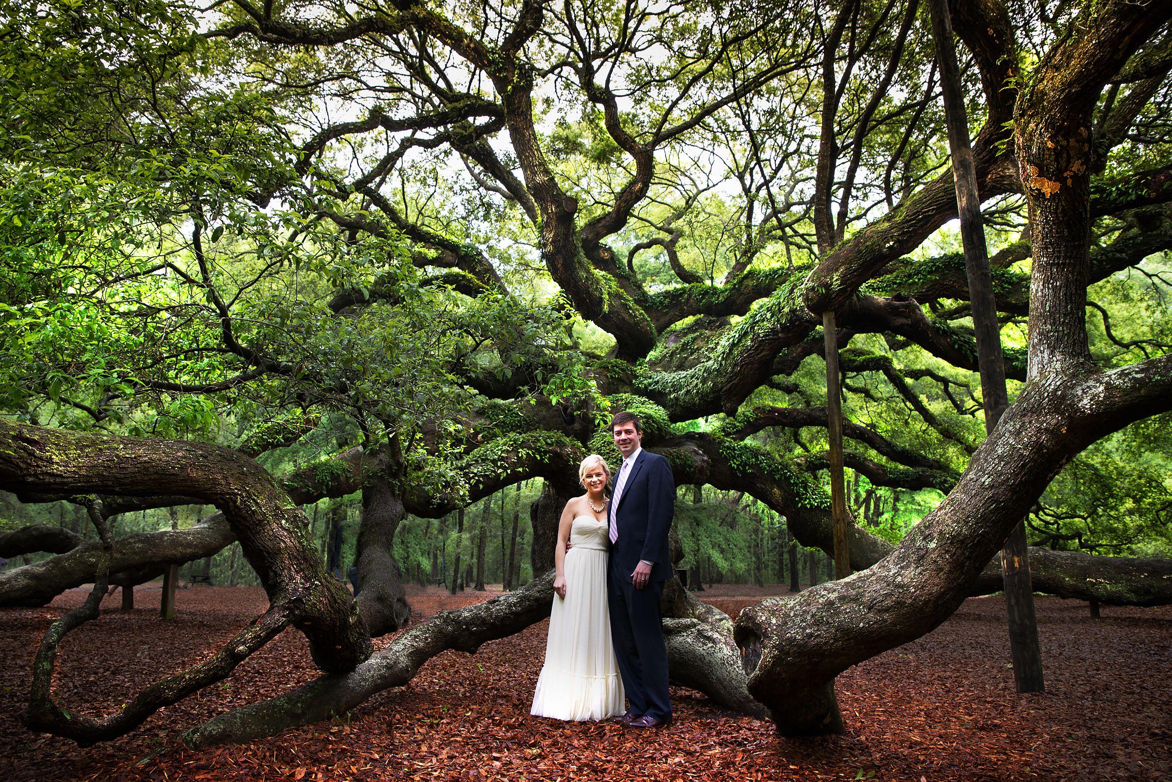 Love The Long Limbs On Angel Oak Tree