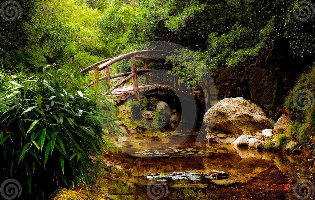 Japanese Garden   A Bridge Over Water In A Japanese Garden In Austin, Texas