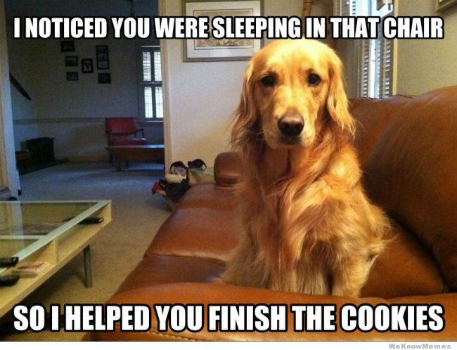 7 Funny Dog Memes And One Gif To Get The Week Started Funny