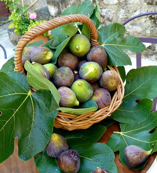 A basket full of figs from La Ferme St Michel, a beautiful XVIth century stone-buiild bed and breakfast in Solerieux, Provence. www.lafermestmichel.fr