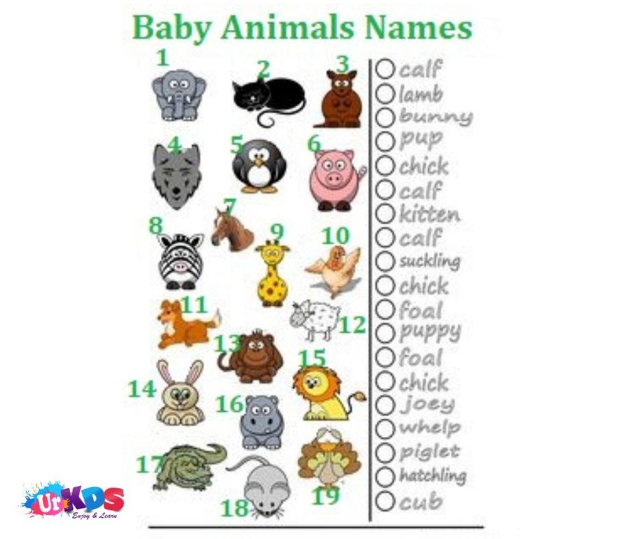 Baby Animals Names Baby Animal Names Animals For Kids Baby Animals