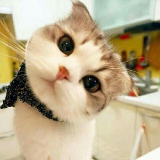Gatito Bello Cute Animals