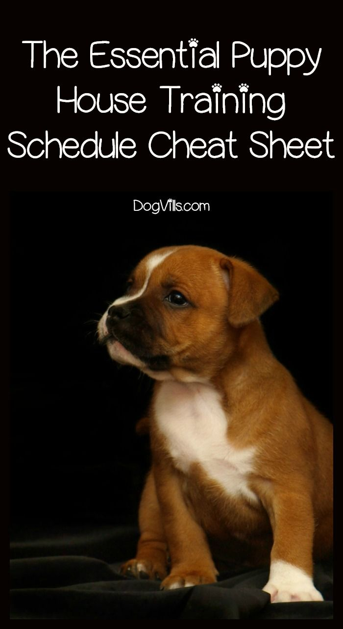 The Puppy House Breaking Schedule Cheat Sheet You Need