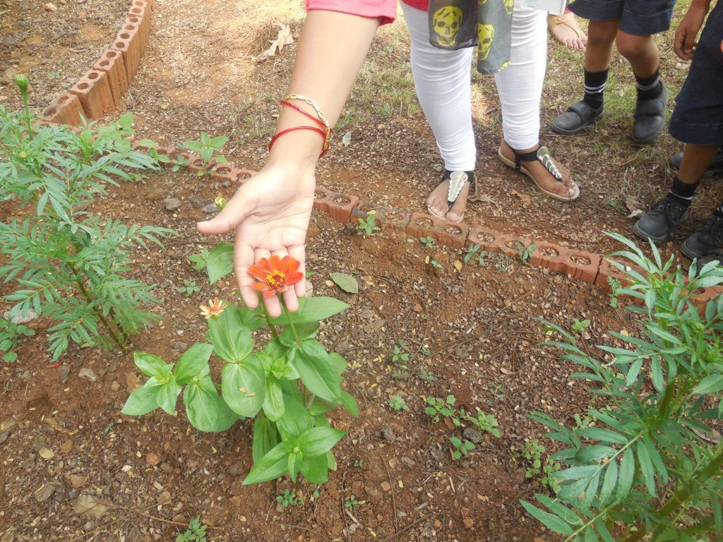 On 23rd January 2015 K1 & K2 children of OISK visited a garden at University of Mumbai Kalina. Children enjoyed right from the beginning as in the bus they started to name the flowers and the teacher then played a game with them by asking the children to name the flowers.The campus of the university was huge so we visited one of the garden where we took the children around showing them different flowers, plants. Children were very excited as they seen different types of flowers.