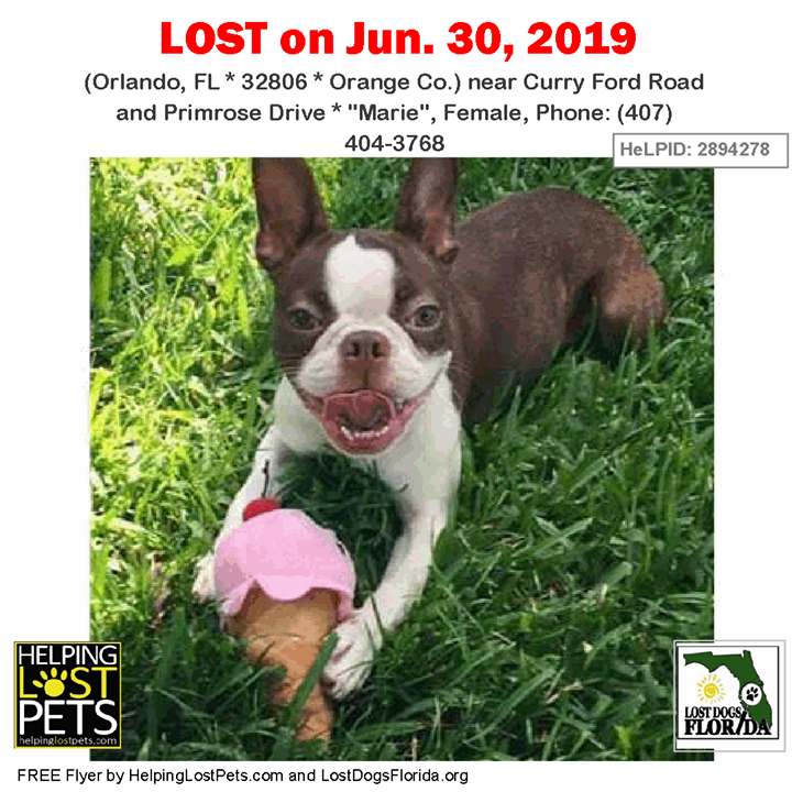 LOST DOG Have you seen Marie? LOSTDOG Marie Orlando