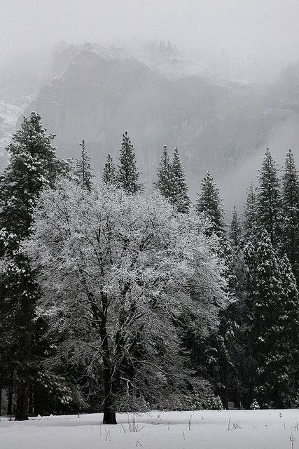 Quiet snowy morning in Curry Village, Yosemite Valley... Morning fog was about to go away...