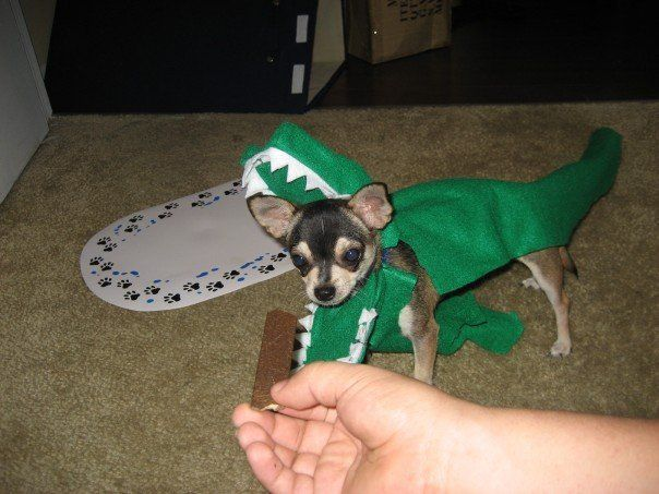 Gator Dragon Snake Costume For Dog Or Prop Little Sewing