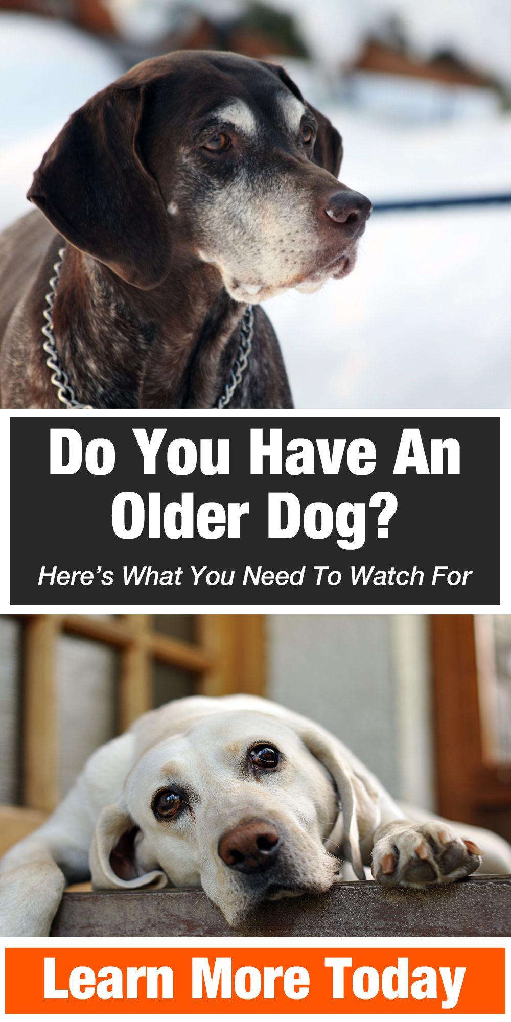 "Warning /""Scottish Terrier/"" on Duty-Laminated Cardboard Dog Breed Sign"