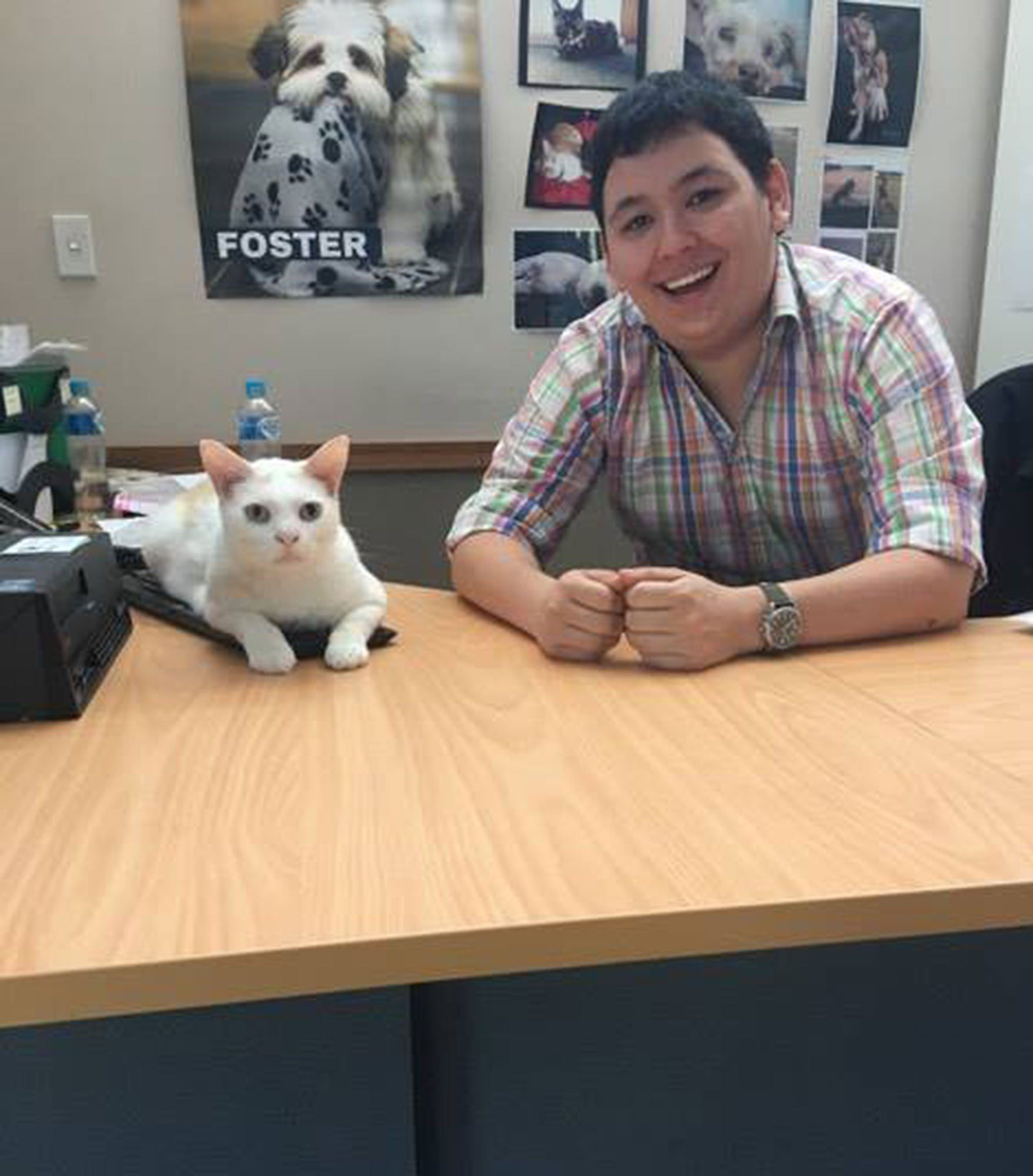 Rescue Single White Male Cat Who Lived At Shelter Over 400 Days Is Hired As Receptionist Then Finally Adopted Animal Welfare League Cats Animals
