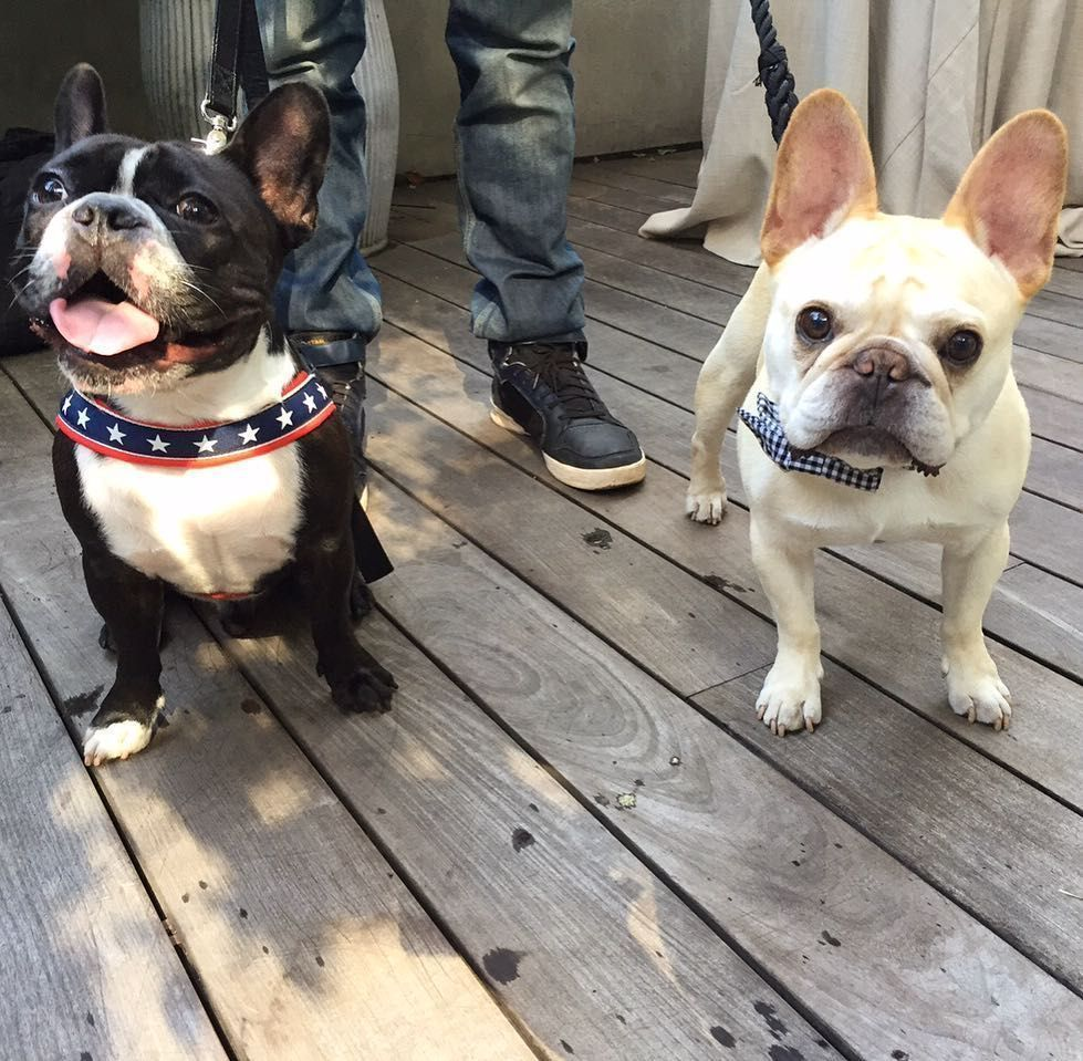 Me and my bro Oscar are like 'Derek and Hansel: So Hot Right Now'!! (no really we were SO HOT. ) #coachpups #frenchiefriday #derilickmyballs by Walter, the French Bulldog @thedailywalter on instagram #walterthefrenchbulldog Me and my bro Oscar are like 'Derek and Hansel: So Hot Right Now'!! (no really we were SO HOT. ) #coachpups #frenchiefriday #derilickmyballs by Walter, the French Bulldog @thedailywalter on instagram #walterthefrenchbulldog Me and my bro Oscar are like 'Derek and Hansel: So